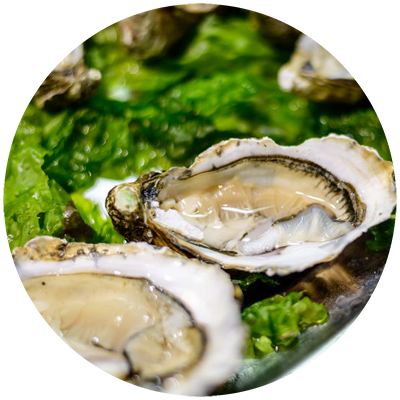 oysters_supply_cambridge
